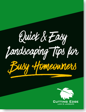 Landscaping Tips for Homeowners