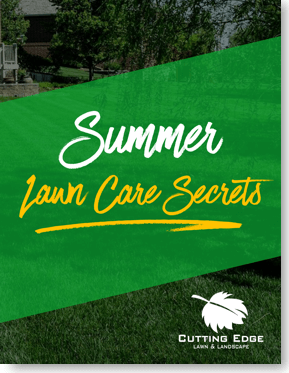 Summer Lawn Care Secrets