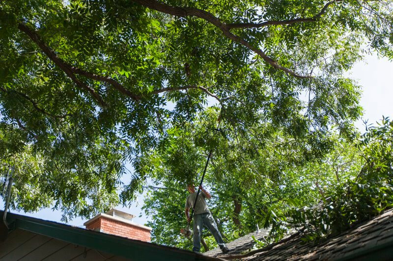 tree removal Wichita