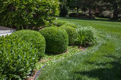 Wichita landscape design